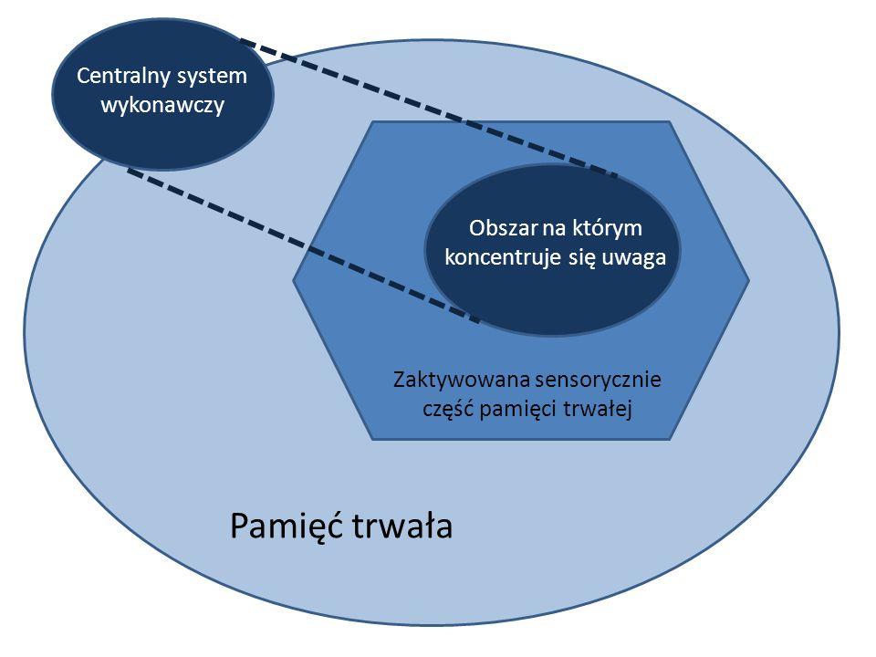 Pamięć trwała Zaktywowana sensorycznie część pamięci trwałej Obszar na którym koncentruje się uwaga Centralny system wykonawczy