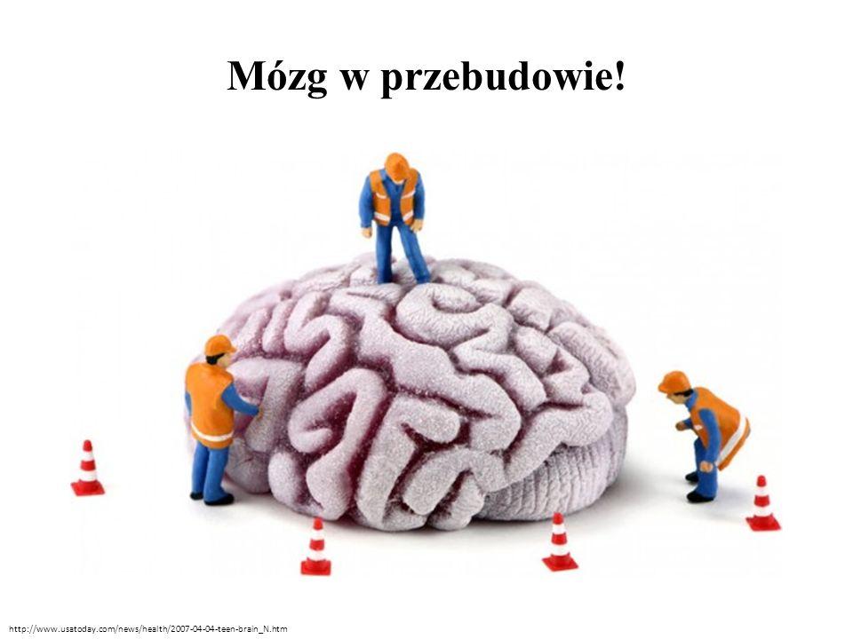 Mózg w przebudowie Płaty czołowe rozwijają się przez 12 lat, potem następuje reorganizacja połączeń i dojrzewanie.
