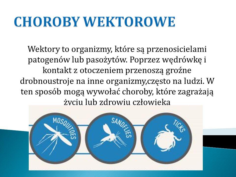 Wektory to organizmy, które są przenosicielami patogenów lub pasożytów. Poprzez wędrówkę i kontakt z otoczeniem przenoszą groźne drobnoustroje na inne