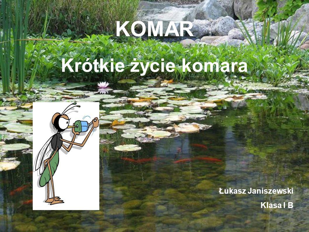KOMAR Krótkie życie komara Łukasz Janiszewski Klasa I B