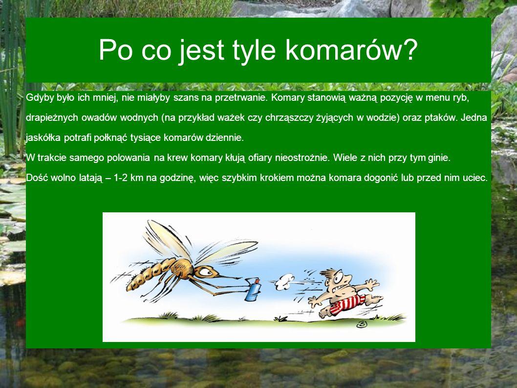 Po co jest tyle komarów? Gdyby było ich mniej, nie miałyby szans na przetrwanie. Komary stanowią ważną pozycję w menu ryb, drapieżnych owadów wodnych