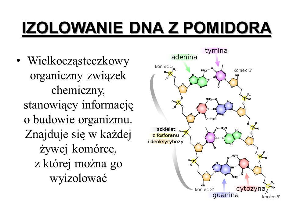 IZOLOWANIE DNA Z POMIDORA Wielkocząsteczkowy organiczny związek chemiczny, stanowiący informację o budowie organizmu. Znajduje się w każdej żywej komó