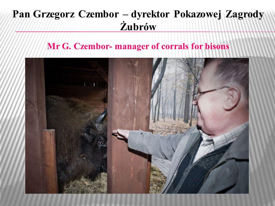Pan Grzegorz Czembor – dyrektor Pokazowej Zagrody Żubrów Mr G. Czembor- manager of corrals for bisons