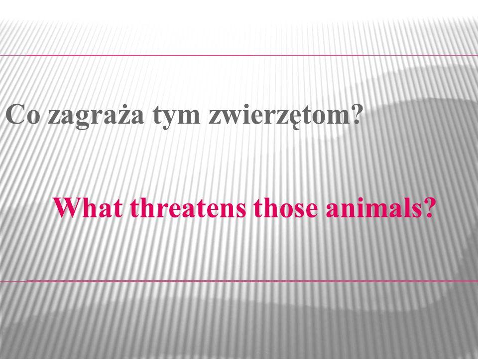 What threatens those animals? Co zagraża tym zwierzętom?