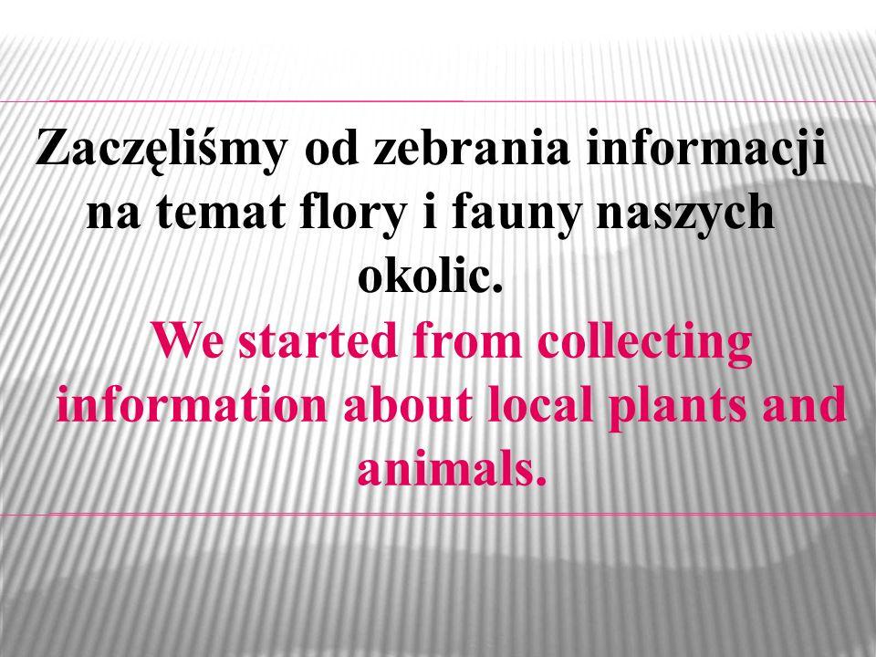 Zaczęliśmy od zebrania informacji na temat flory i fauny naszych okolic. We started from collecting information about local plants and animals.