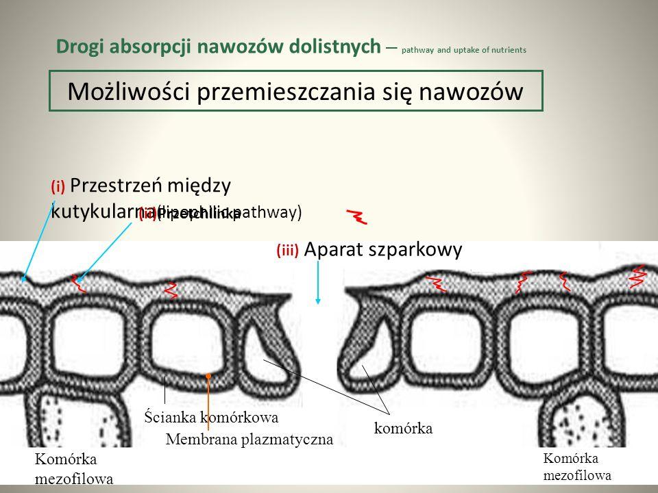 (i) Przestrzeń między kutykularna (lipophilic pathway) Możliwości przemieszczania się nawozów (ii)Przetchlinka (iii) Aparat szparkowy Komórka mezofilowa Komórka mezofilowa komórka Ścianka komórkowa Membrana plazmatyczna Drogi absorpcji nawozów dolistnych – pathway and uptake of nutrients
