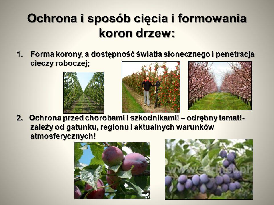 Ochrona i sposób cięcia i formowania koron drzew: 1.Forma korony, a dostępność światła słonecznego i penetracja cieczy roboczej; 2.