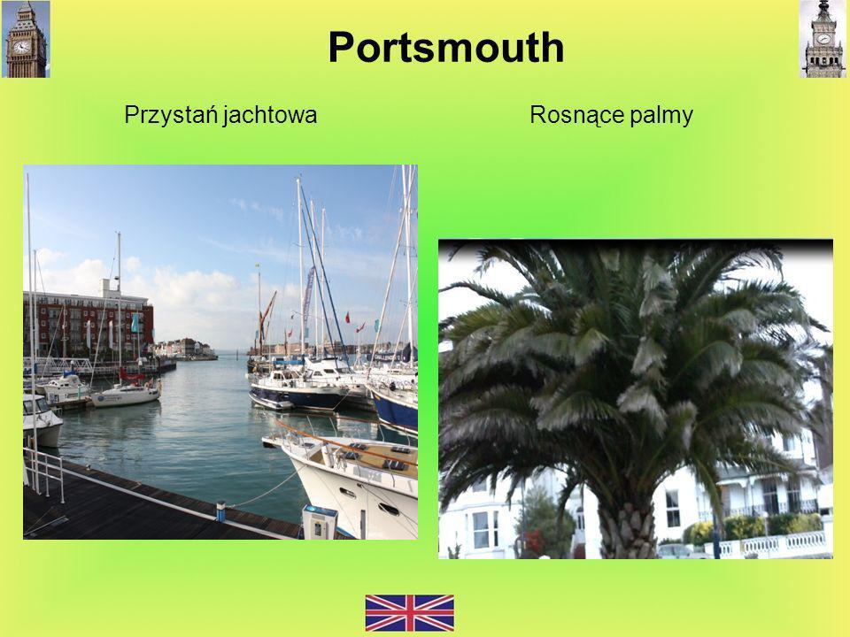 Przystań jachtowa Rosnące palmy Portsmouth