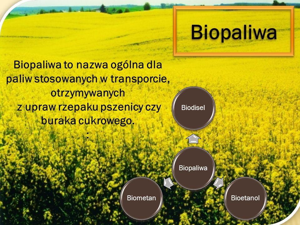 Biopaliwa to nazwa ogólna dla paliw stosowanych w transporcie, otrzymywanych z upraw rzepaku pszenicy czy buraka cukrowego. : BiopaliwaBiodiselBioetan
