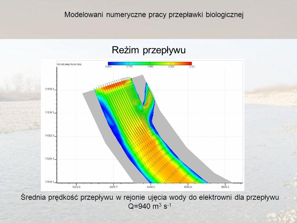 Modelowani numeryczne pracy przepławki biologicznej Reżim przepływu Średnia prędkość przepływu w rejonie ujęcia wody do elektrowni dla przepływu Q=940