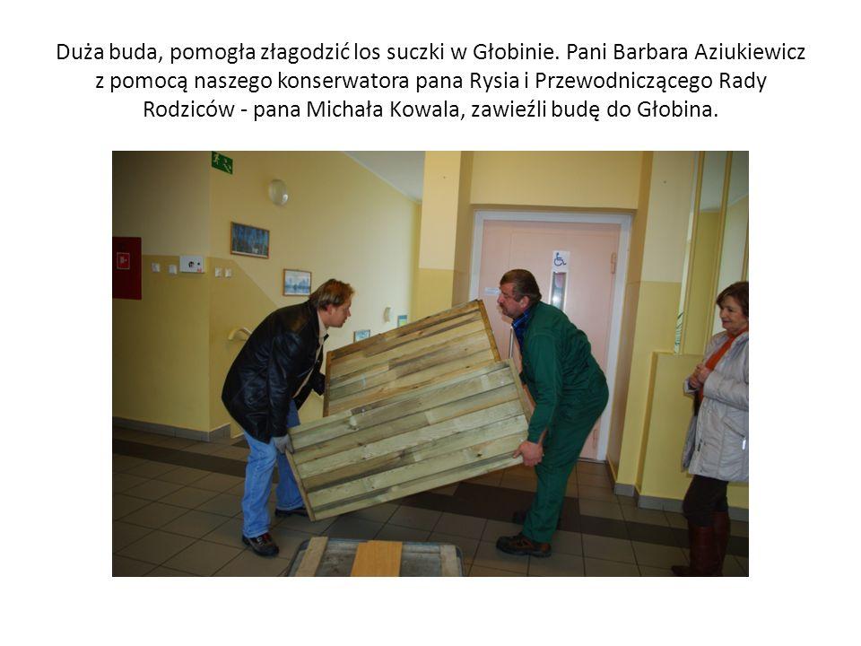 Duża buda, pomogła złagodzić los suczki w Głobinie. Pani Barbara Aziukiewicz z pomocą naszego konserwatora pana Rysia i Przewodniczącego Rady Rodziców