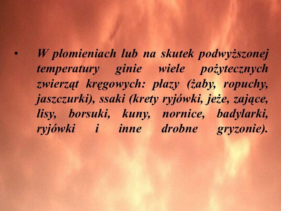 W płomieniach lub na skutek podwyższonej temperatury ginie wiele pożytecznych zwierząt kręgowych: płazy (żaby, ropuchy, jaszczurki), ssaki (krety ryjó