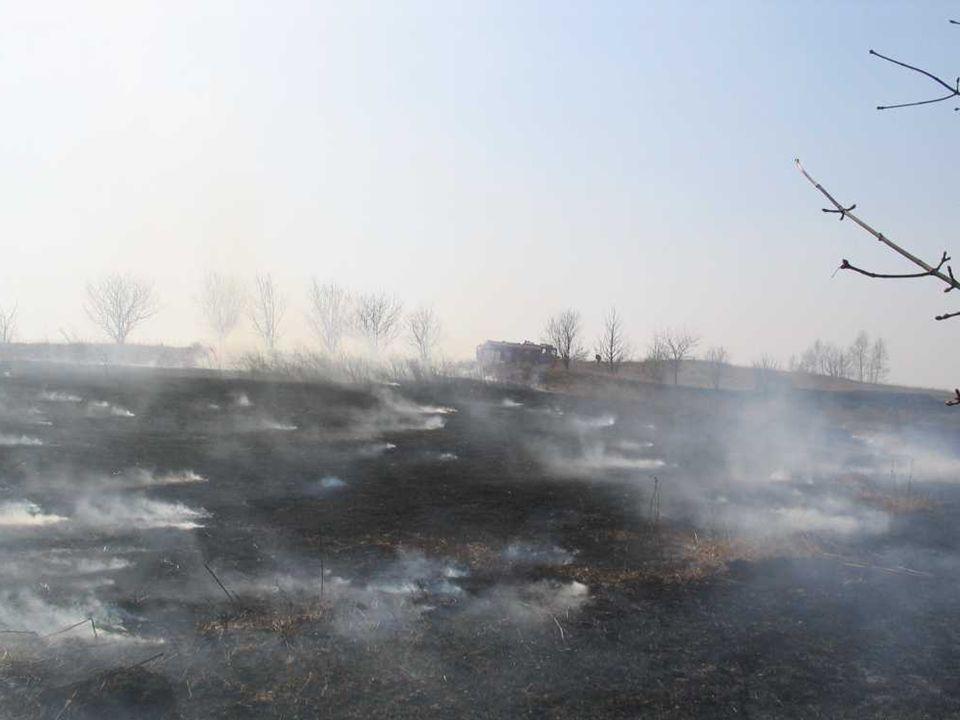 II.Wypalanie traw, a zwierzęta Śmierć w płomieniach czyha na ptaki.