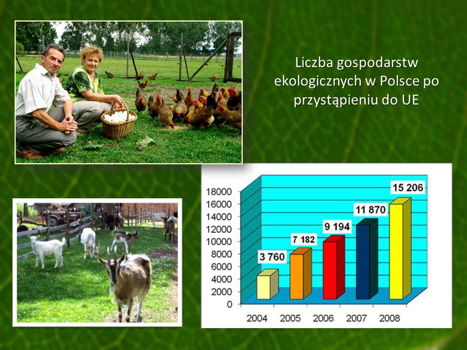 Liczba gospodarstw ekologicznych w Polsce po przystąpieniu do UE