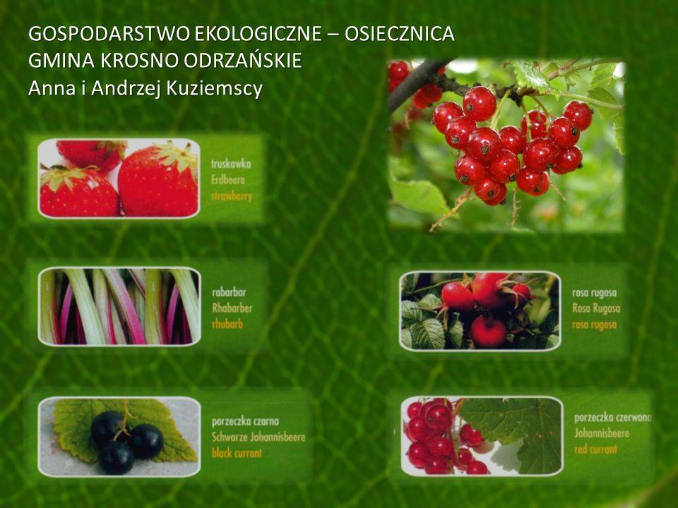 GOSPODARSTWO EKOLOGICZNE – OSIECZNICA GMINA KROSNO ODRZAŃSKIE Anna i Andrzej Kuziemscy