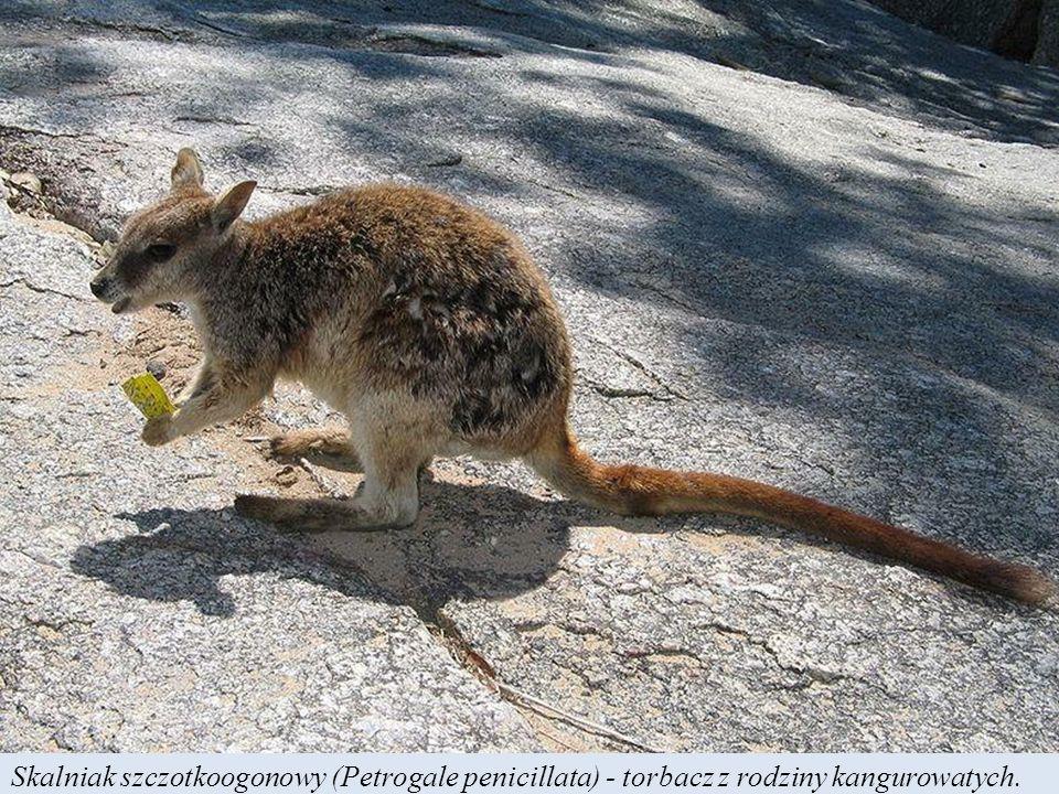 Występujące prawdopodobnie tylko w parku Kakadu pytony Oenpelli zostały odkryte przez naukę dopiero w 1977 r.