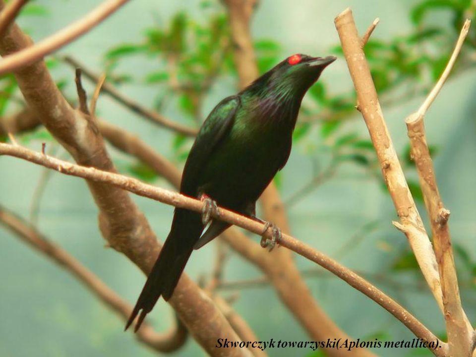 Widok ptaków wodnych na tle krajobrazu parku Kakadu dostarcza niezapomnianych wrażeń. To jedno z niewielu miejsc w Australii, w których schronienie zn