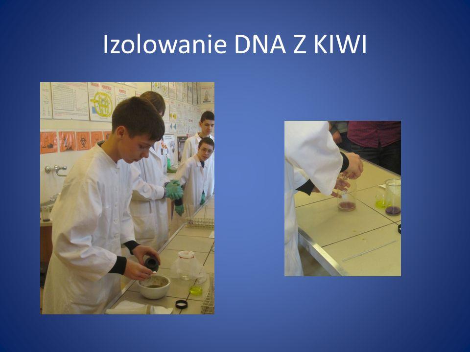 Izolowanie DNA Z KIWI