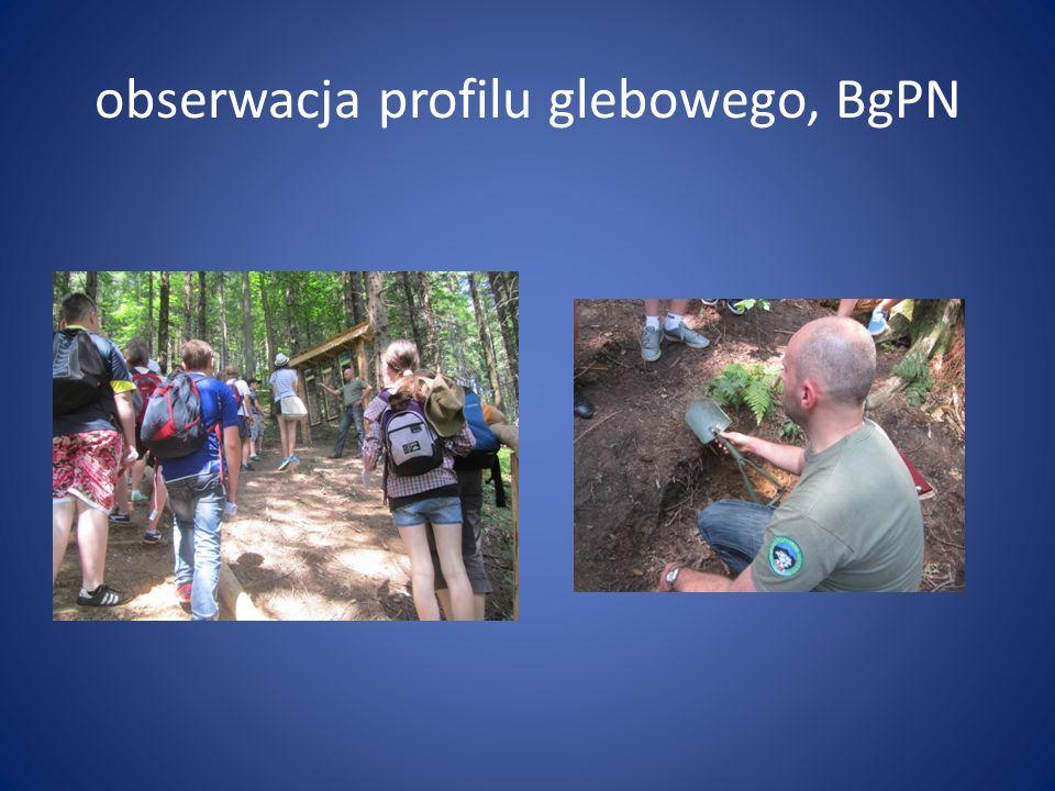 obserwacja profilu glebowego, BgPN
