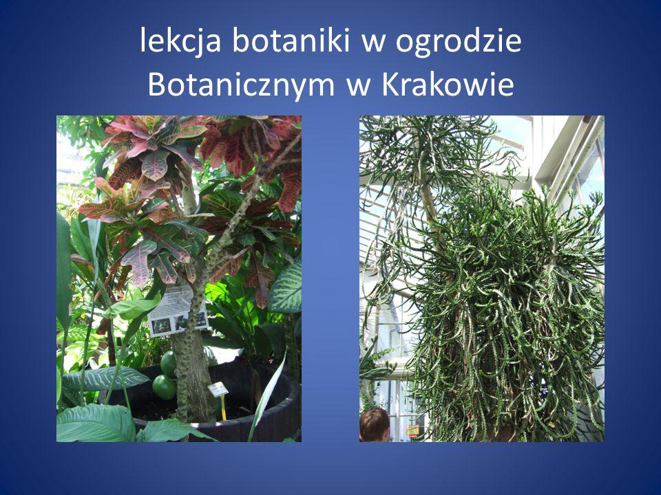 lekcja botaniki w ogrodzie Botanicznym w Krakowie