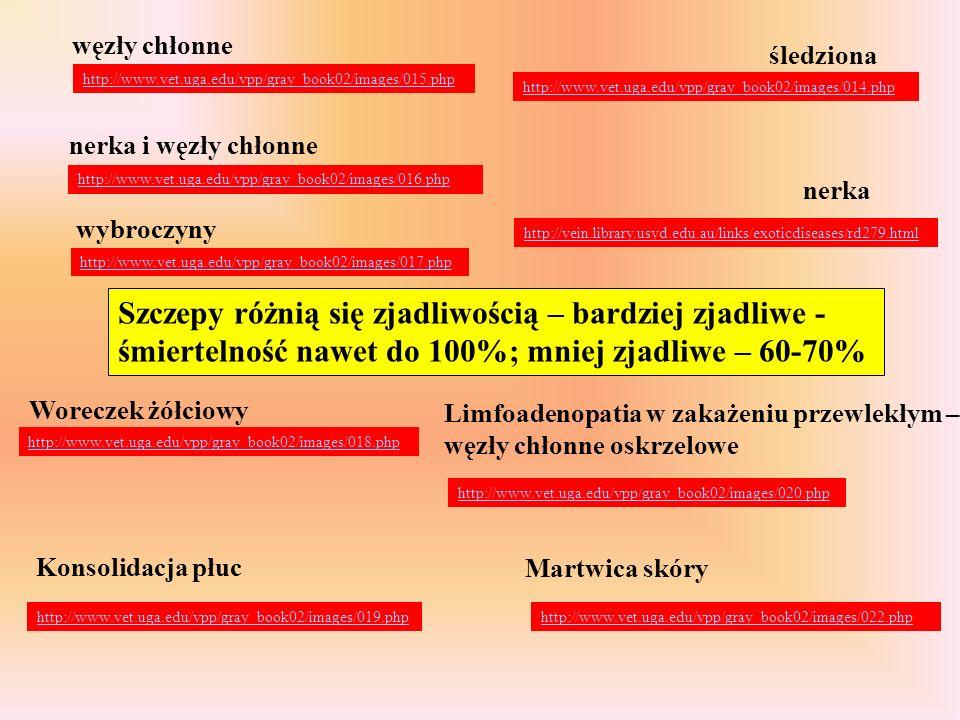 nerka węzły chłonne śledziona http://www.vet.uga.edu/vpp/gray_book02/images/014.php http://www.vet.uga.edu/vpp/gray_book02/images/015.php http://www.v
