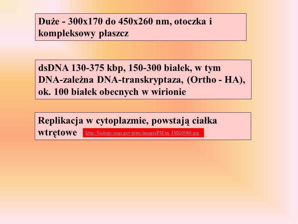 Replikacja w cytoplazmie, powstają ciałka wtrętowe Duże - 300x170 do 450x260 nm, otoczka i kompleksowy płaszcz dsDNA 130-375 kbp, 150-300 białek, w ty