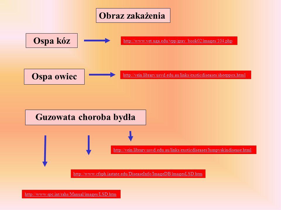 Ospa kóz http://www.vet.uga.edu/vpp/gray_book02/images/104.php Ospa owiec http://vein.library.usyd.edu.au/links/exoticdiseases/sheeppox.html Guzowata