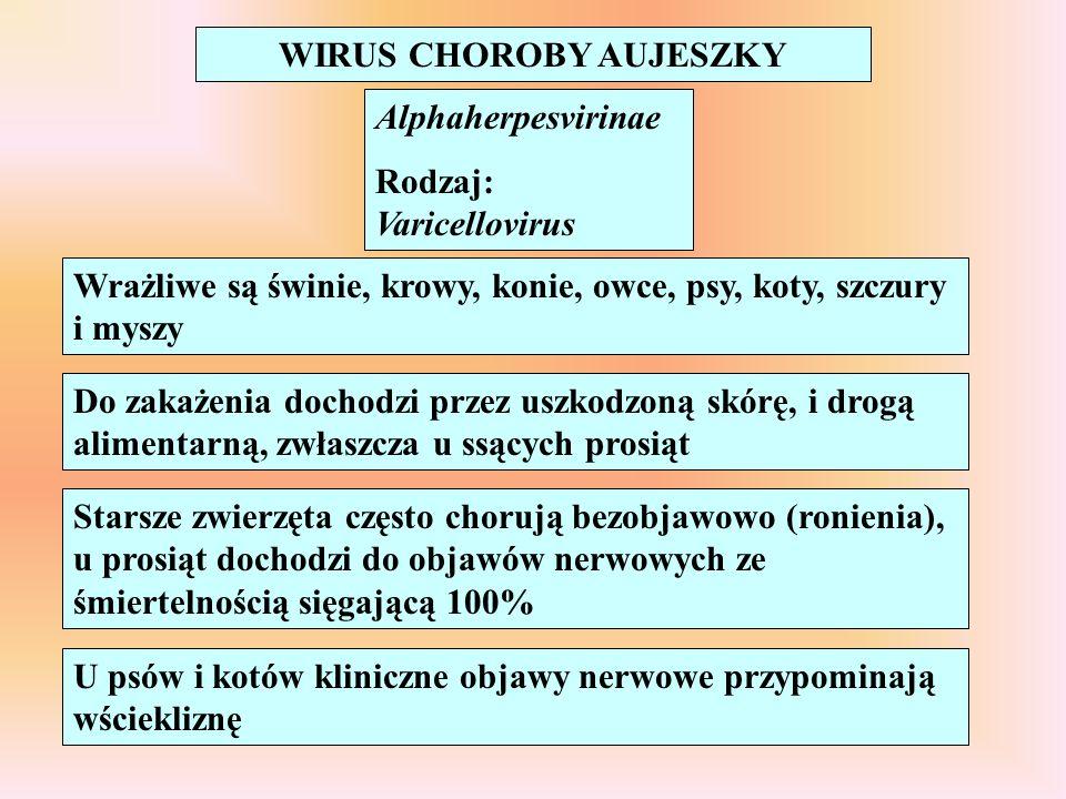 WIRUS CHOROBY AUJESZKY Alphaherpesvirinae Rodzaj: Varicellovirus Wrażliwe są świnie, krowy, konie, owce, psy, koty, szczury i myszy Do zakażenia docho