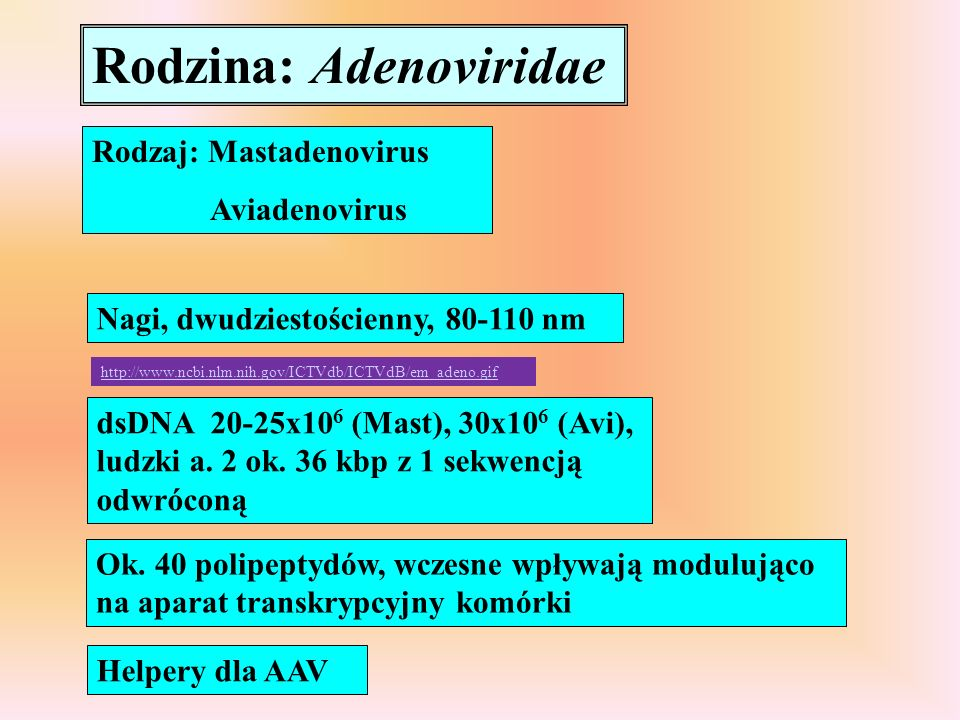 Rodzina: Adenoviridae Rodzaj: Mastadenovirus Aviadenovirus Nagi, dwudziestościenny, 80-110 nm dsDNA 20-25x10 6 (Mast), 30x10 6 (Avi), ludzki a. 2 ok.