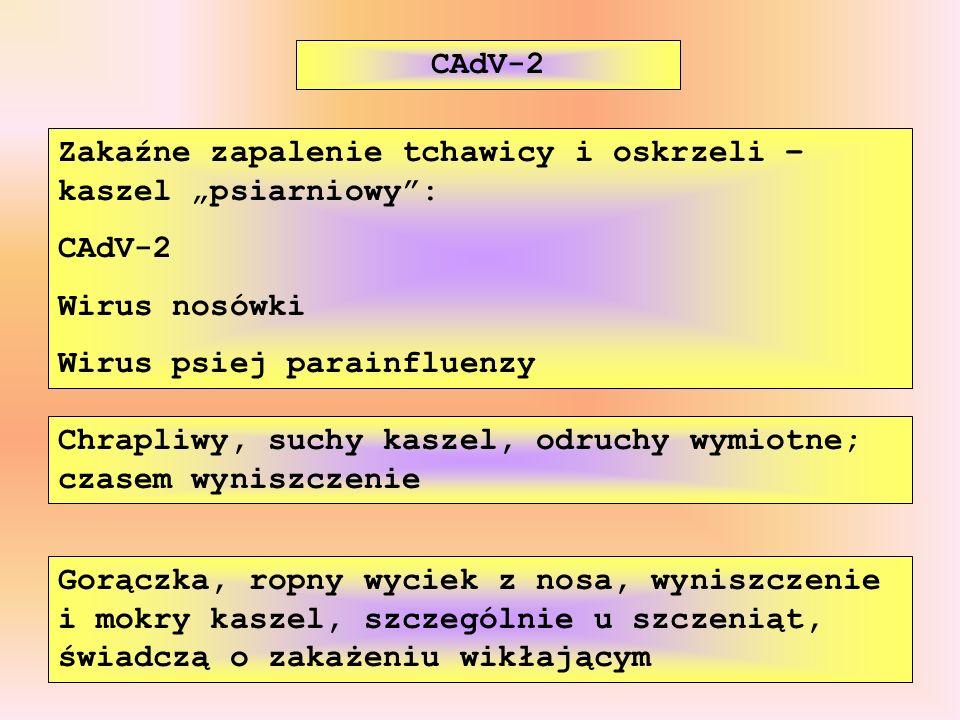 Zakaźne zapalenie tchawicy i oskrzeli – kaszel psiarniowy: CAdV-2 Wirus nosówki Wirus psiej parainfluenzy CAdV-2 Gorączka, ropny wyciek z nosa, wynisz