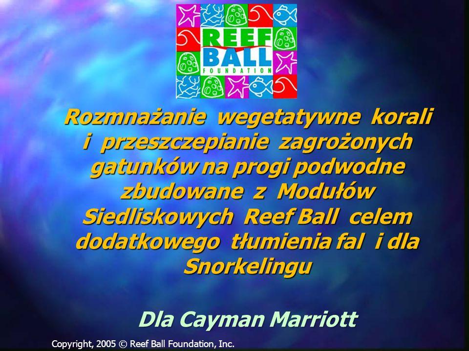 Rozmnażanie wegetatywne korali i przeszczepianie zagrożonych gatunków na progi podwodne zbudowane z Modułów Siedliskowych Reef Ball celem dodatkowego