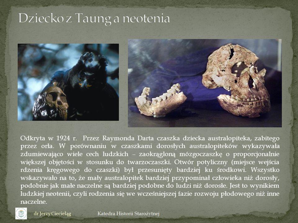 Wstanie na dwie nogi znacznie zwęziło kanał rodny samicy australopiteka, co wymusiło ustawienie dziecka w czasie porodu najlepiej głową w dół i twarzą do pleców matki.