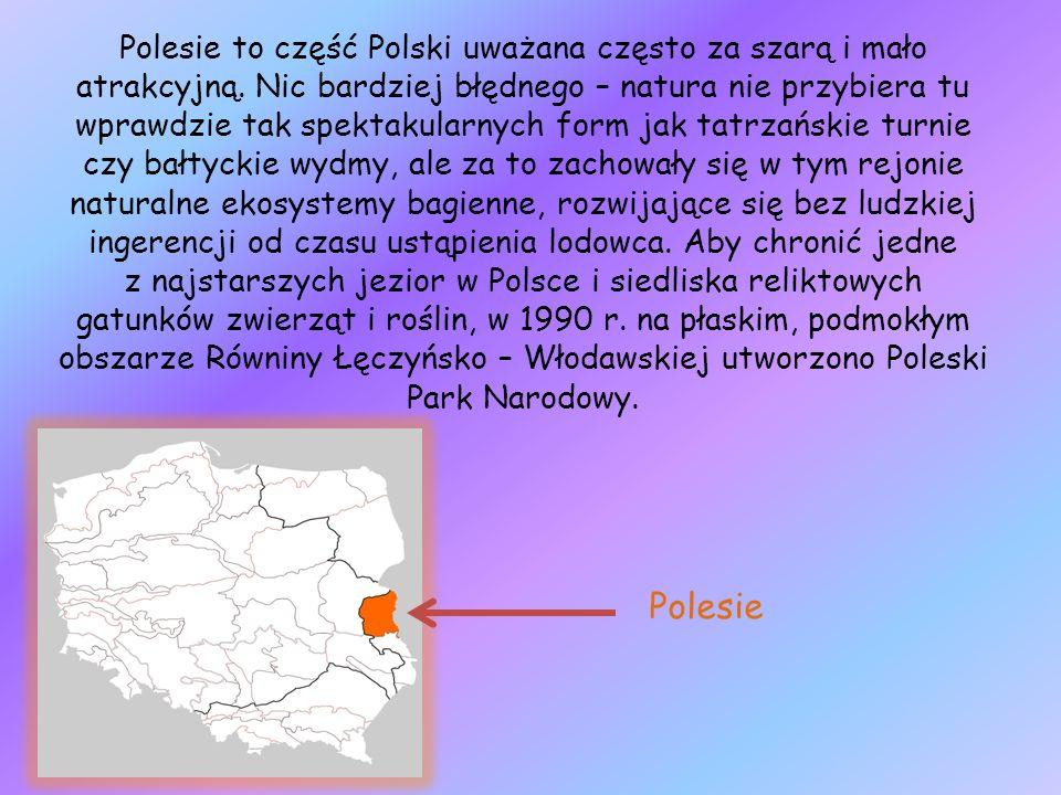 Polesie to część Polski uważana często za szarą i mało atrakcyjną. Nic bardziej błędnego – natura nie przybiera tu wprawdzie tak spektakularnych form