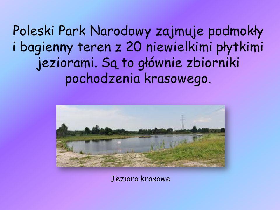 Poleski Park Narodowy zajmuje podmokły i bagienny teren z 20 niewielkimi płytkimi jeziorami. Są to głównie zbiorniki pochodzenia krasowego. Jezioro kr