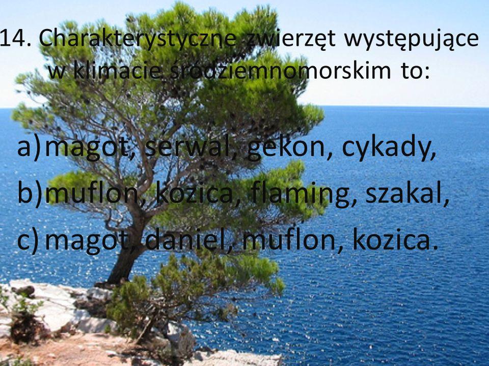 14. Charakterystyczne zwierzęt występujące w klimacie śródziemnomorskim to: a)magot, serwal, gekon, cykady, b)muflon, kozica, flaming, szakal, c)magot