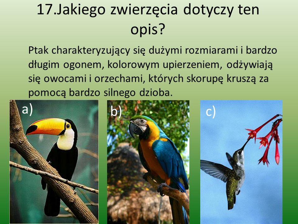 17.Jakiego zwierzęcia dotyczy ten opis? Ptak charakteryzujący się dużymi rozmiarami i bardzo długim ogonem, kolorowym upierzeniem, odżywiają się owoca