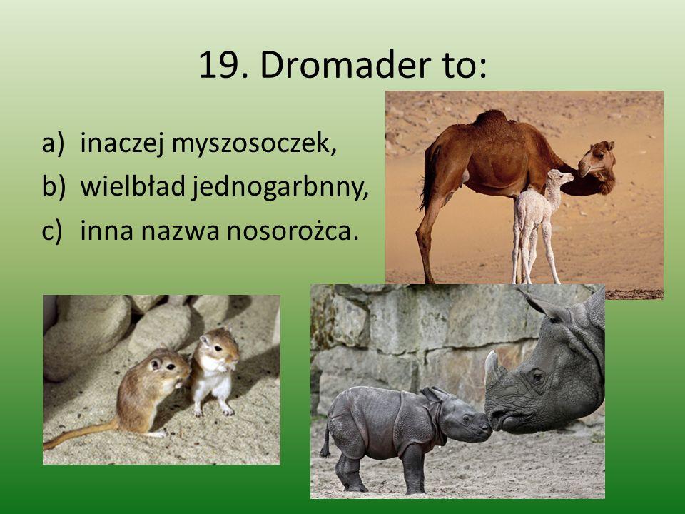 19. Dromader to: a)inaczej myszosoczek, b)wielbład jednogarbnny, c)inna nazwa nosorożca.