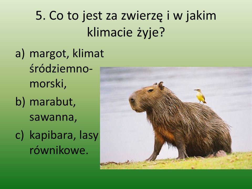 5. Co to jest za zwierzę i w jakim klimacie żyje? a)margot, klimat śródziemno- morski, b)marabut, sawanna, c)kapibara, lasy równikowe.