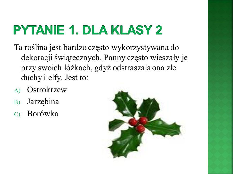 Ta roślina jest bardzo często wykorzystywana do dekoracji świątecznych. Panny często wieszały je przy swoich łóżkach, gdyż odstraszała ona złe duchy i