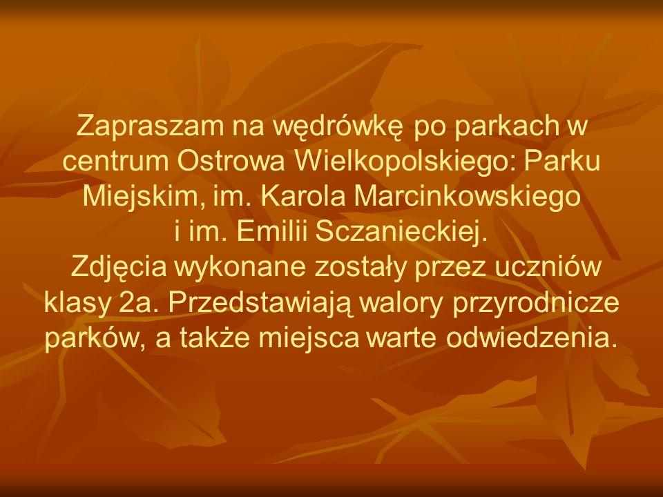 Park Miejski Leży w centrum Ostrowa Wielkopolskiego, w prostokącie między ulicami: Ledóchowskiego, Piłsudskiego, Kompałły i aleją Powstańców Wielkopolskich.