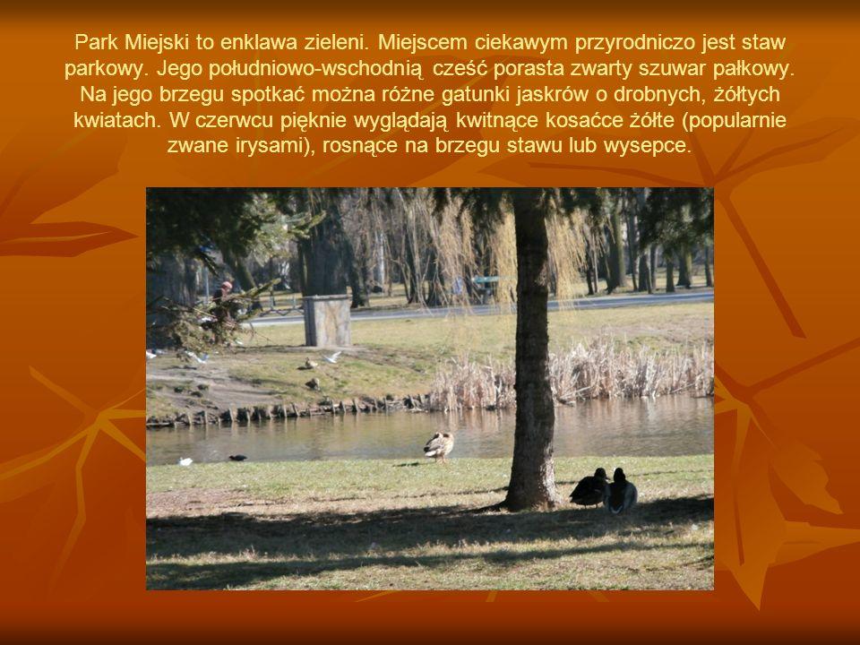W parku występują też gołębie miejskie, będące potomkami gołębi skalnych