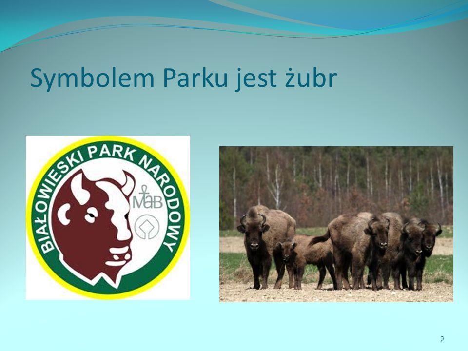 Symbolem Parku jest żubr 2