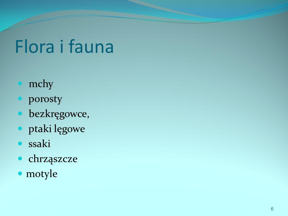 Flora i fauna mchy porosty bezkręgowce, ptaki lęgowe ssaki chrząszcze motyle 6