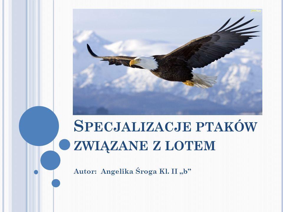 S PECJALIZACJE PTAKÓW ZWIĄZANE Z LOTEM Autor: Angelika Śroga Kl. II b