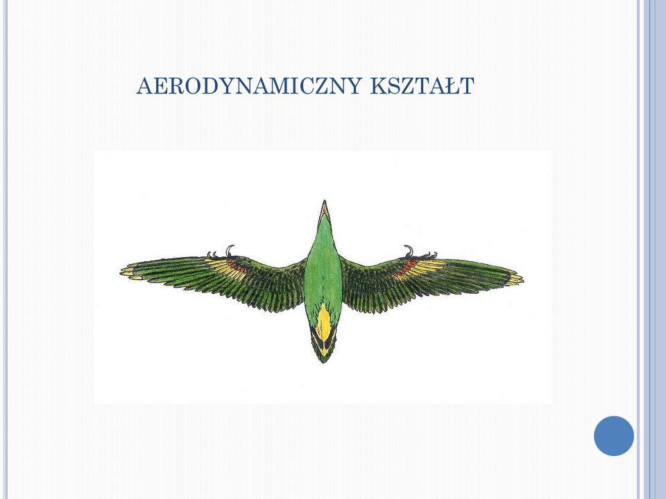 Prawie wszystkie ptaki szybują, przy czym ptaki małe szybują bezpośrednio przed lądowaniem, zaś ptaki duże mogą unosić się w powietrzu bez poruszania skrzydłami przez dłuższy czas.