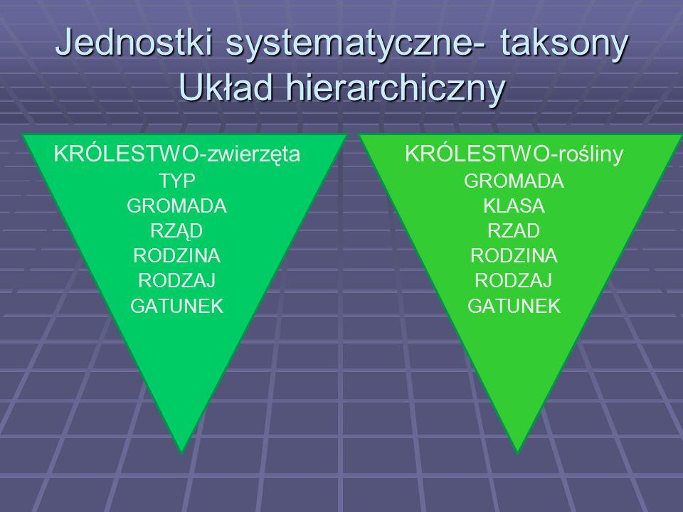 Jednostki systematyczne- taksony Układ hierarchiczny KRÓLESTWO-zwierzęta TYP GROMADA RZĄD RODZINA RODZAJ GATUNEK KRÓLESTWO-rośliny GROMADA KLASA RZAD