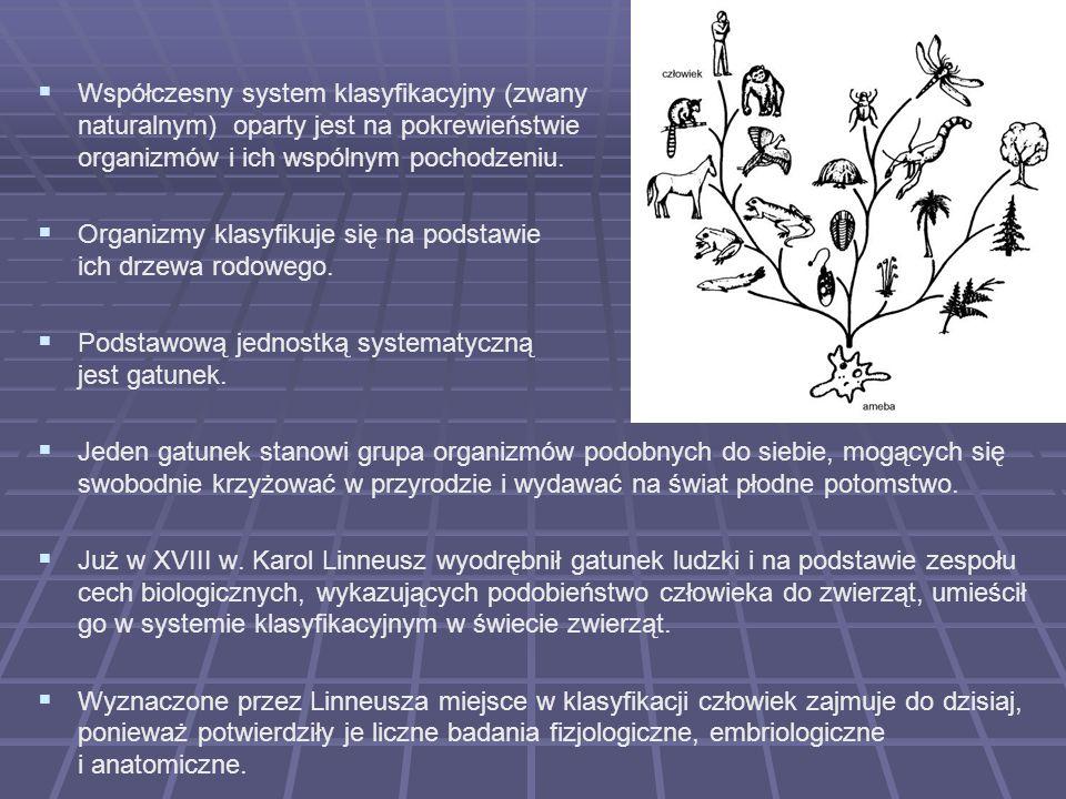 Współczesny system klasyfikacyjny (zwany naturalnym) oparty jest na pokrewieństwie organizmów i ich wspólnym pochodzeniu. Organizmy klasyfikuje się na