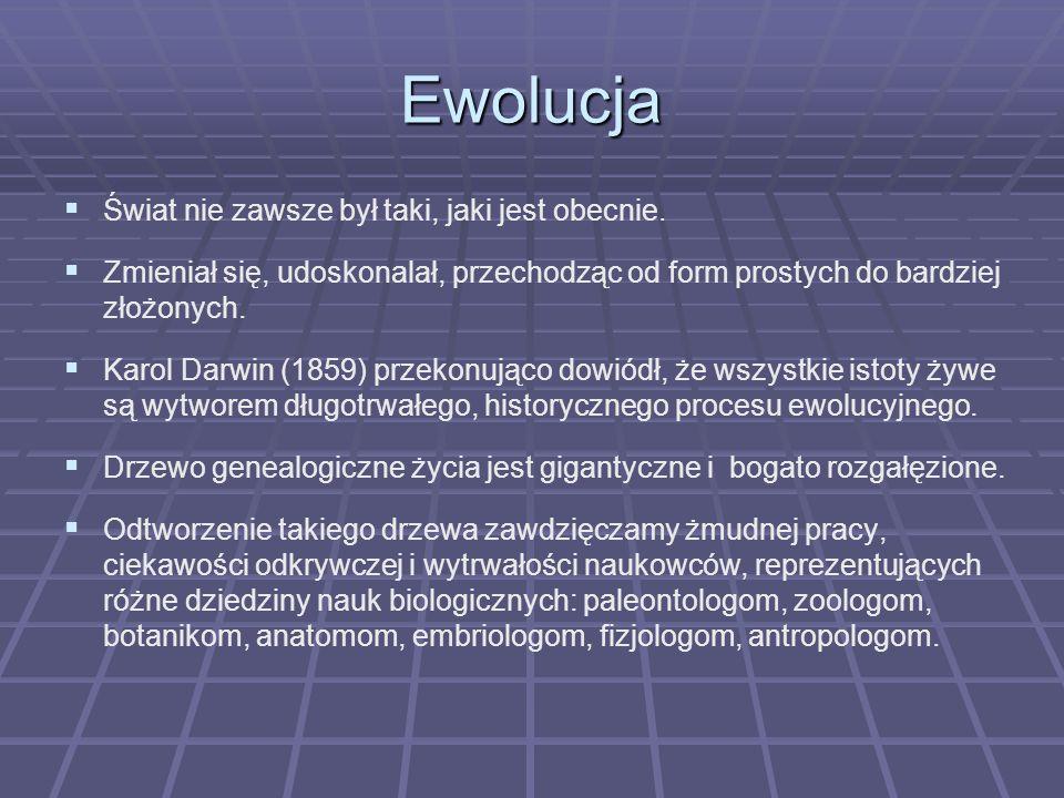 Ewolucja Świat nie zawsze był taki, jaki jest obecnie. Zmieniał się, udoskonalał, przechodząc od form prostych do bardziej złożonych. Karol Darwin (18