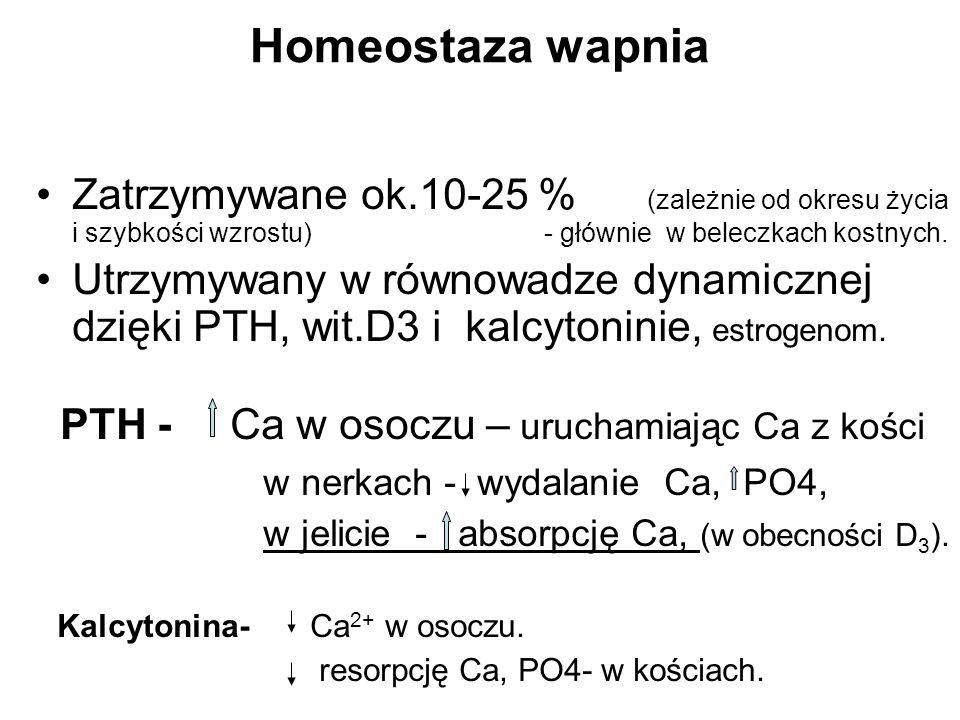 Homeostaza wapnia Zatrzymywane ok.10-25 % (zależnie od okresu życia i szybkości wzrostu) - głównie w beleczkach kostnych. Utrzymywany w równowadze dyn