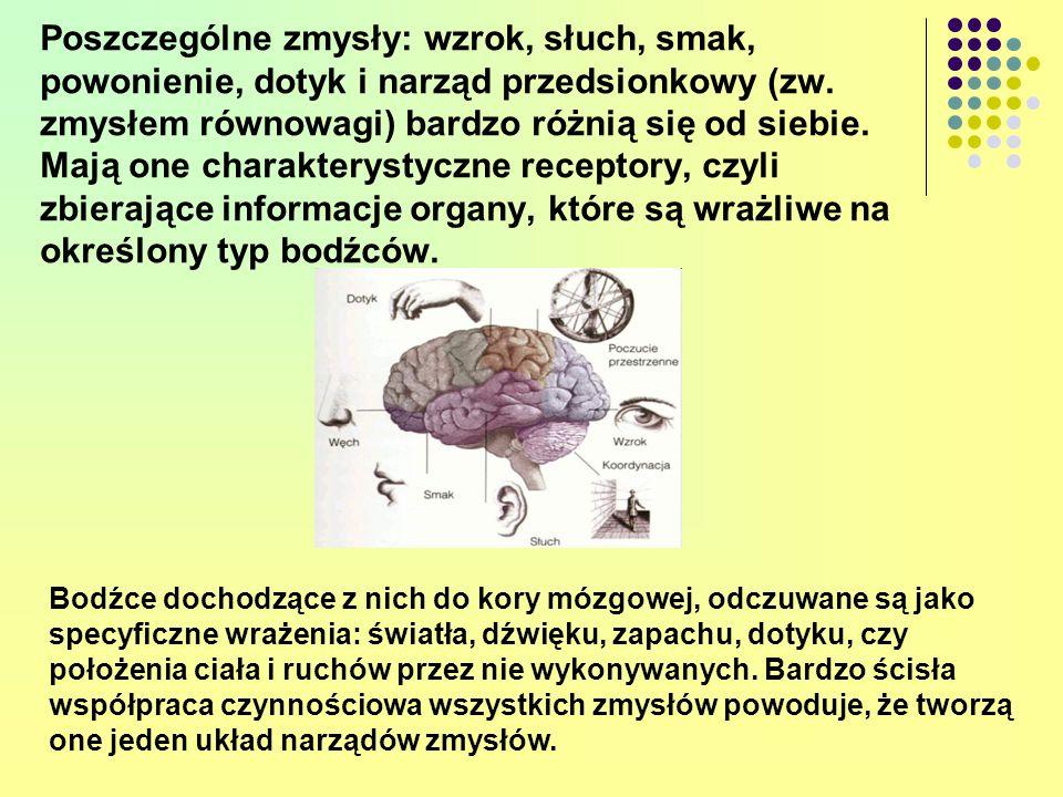 Poszczególne zmysły: wzrok, słuch, smak, powonienie, dotyk i narząd przedsionkowy (zw. zmysłem równowagi) bardzo różnią się od siebie. Mają one charak